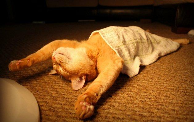 macskak-akik-mesterien-uzik-az-alvas-muveszetet-01