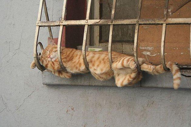 macskak-akik-mesterien-uzik-az-alvas-muveszetet-05
