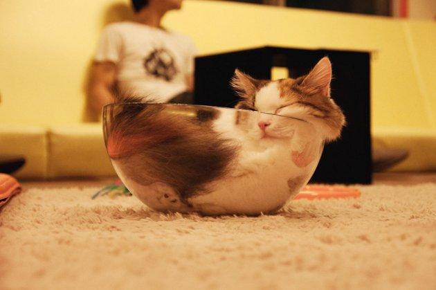 macskak-akik-mesterien-uzik-az-alvas-muveszetet-07