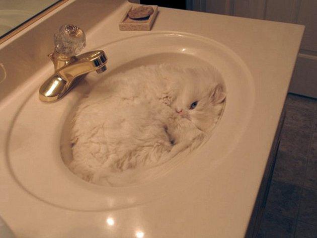 macskak-akik-mesterien-uzik-az-alvas-muveszetet-08