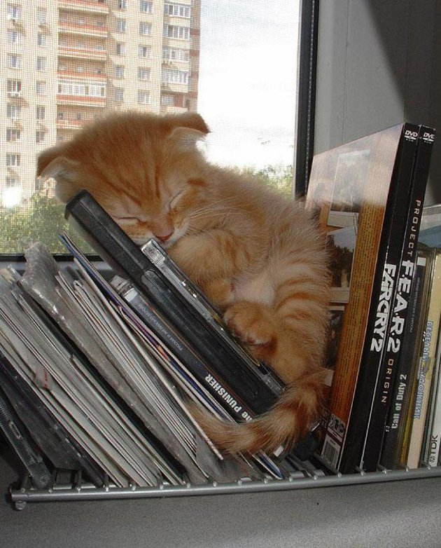 macskak-akik-mesterien-uzik-az-alvas-muveszetet-11