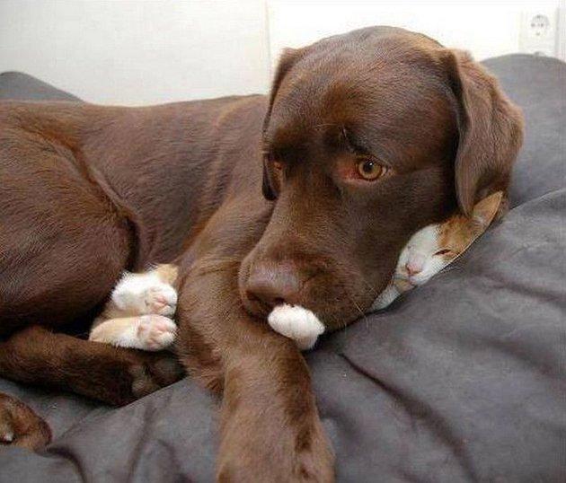 macskak-akik-mesterien-uzik-az-alvas-muveszetet-13