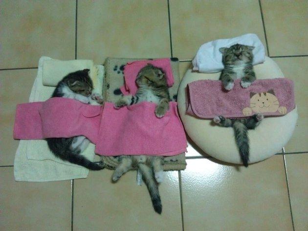 macskak-akik-mesterien-uzik-az-alvas-muveszetet-16