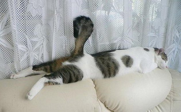 macskak-akik-mesterien-uzik-az-alvas-muveszetet-17