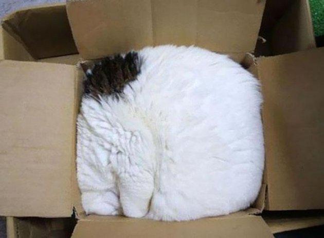 macskak-akik-mesterien-uzik-az-alvas-muveszetet-18