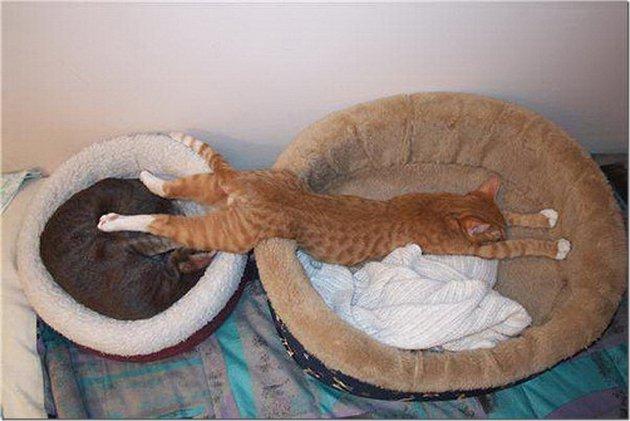 macskak-akik-mesterien-uzik-az-alvas-muveszetet-20