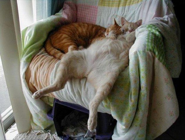 macskak-akik-mesterien-uzik-az-alvas-muveszetet-21