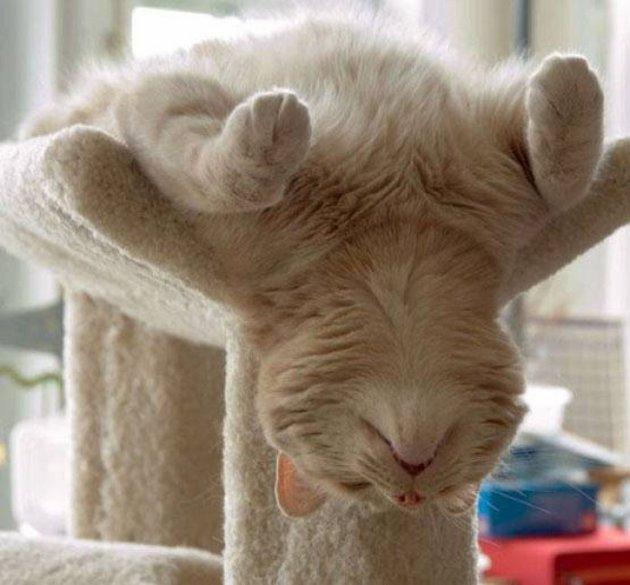 macskak-akik-mesterien-uzik-az-alvas-muveszetet-22