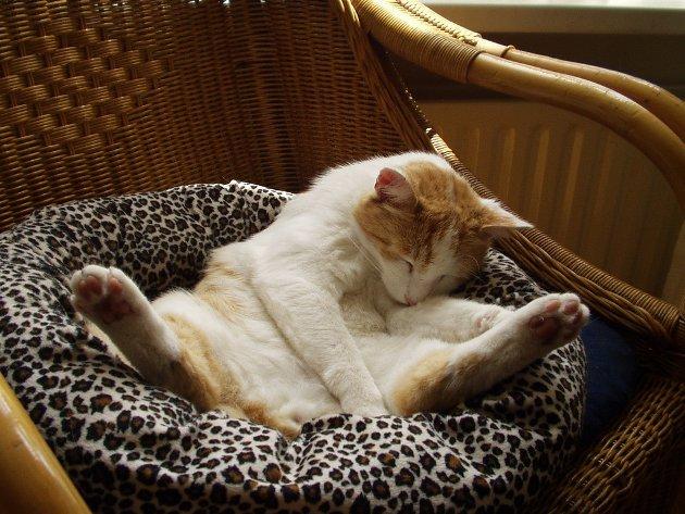 macskak-akik-mesterien-uzik-az-alvas-muveszetet-23