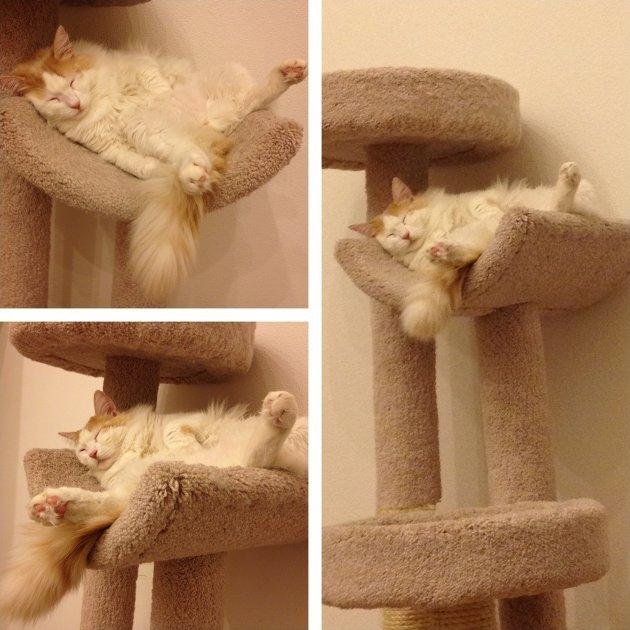 macskak-akik-mesterien-uzik-az-alvas-muveszetet-24