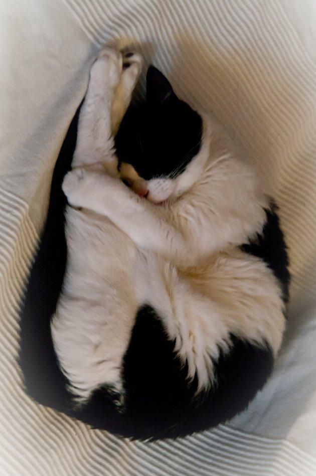 macskak-akik-mesterien-uzik-az-alvas-muveszetet-25