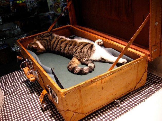 macskak-akik-mesterien-uzik-az-alvas-muveszetet-28