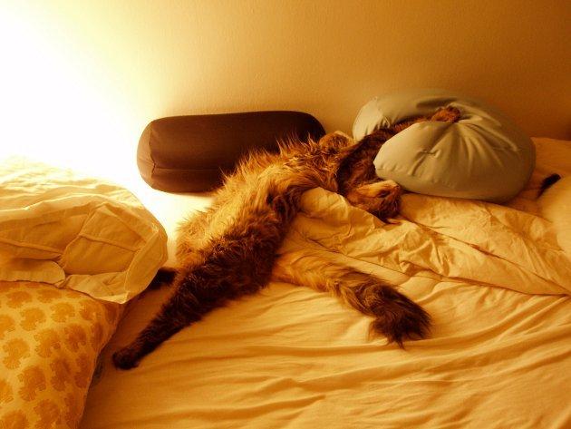 macskak-akik-mesterien-uzik-az-alvas-muveszetet-30