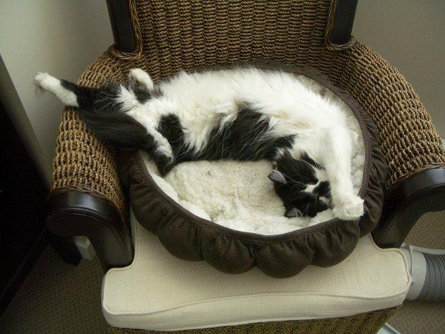 macskak-akik-mesterien-uzik-az-alvas-muveszetet-32