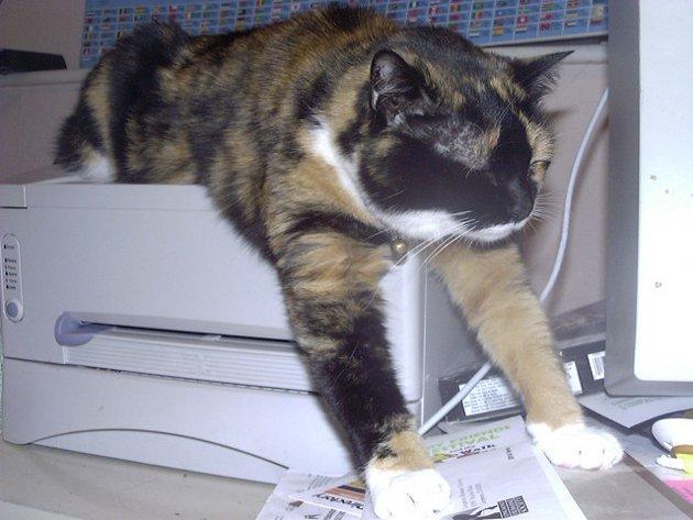 macskak-akik-mesterien-uzik-az-alvas-muveszetet-34